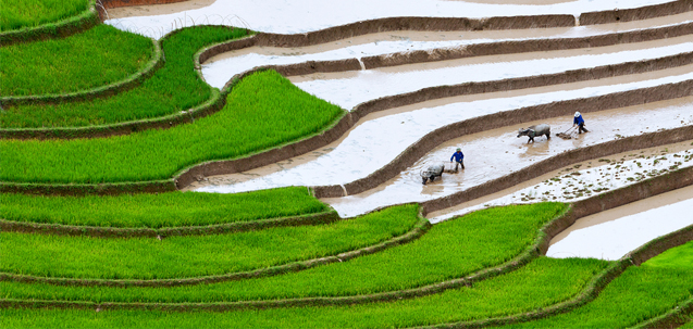 rural industrialization through promotion of agro based Of agricultural land in bangladesh is the growth of rural housing  on  industrialization, agriculture remains the lifeblood for many  10) promotion of  agriculture and agriculture based services through mobile operators.